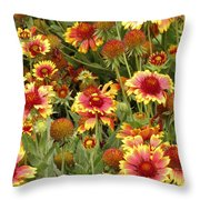 nature - flowers -Blanket Flowers Six -photography Throw Pillow by Ann Powell