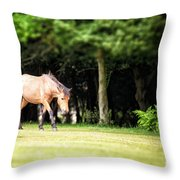 New Forest Pony Throw Pillow by Jane Rix
