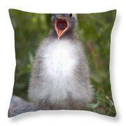 Newborn Arctic Tern Chick With Mouth Throw Pillow by Doug Lindstrand