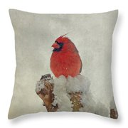 Northern Cardinal Throw Pillow by Sandy Keeton