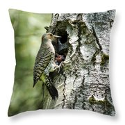 Northern Flicker Nest Throw Pillow by Christina Rollo