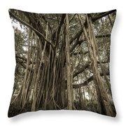 Old Banyan Tree Throw Pillow by Adam Romanowicz