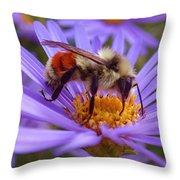 Orange-banded Bee Throw Pillow by Rona Black