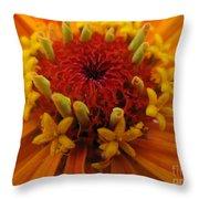 Orange Zinnia. Up Close And Personal Throw Pillow by Ausra Paulauskaite