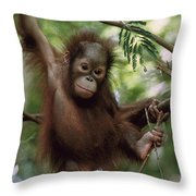 Orangutan Infant Hanging Borneo Throw Pillow by Konrad Wothe