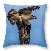 Osprey Flying Away Throw Pillow by Robert Bales