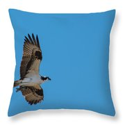 Osprey Flying Home With Dinner Throw Pillow by Robert Bales