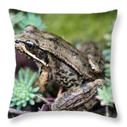 Pacific Tree Frog Among Succulent Plant Throw Pillow by David Gn