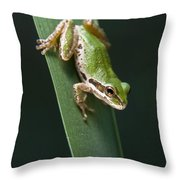 Pacific Tree Frog Pseudacris Regilla Throw Pillow by Jack Goldfarb