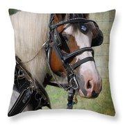 Pandora in Harness Throw Pillow by Fran J Scott