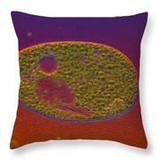 Paramecium Bursaria Throw Pillow by Michael Abbey