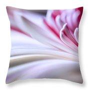 Pastel Gerbera Throw Pillow by Adam Romanowicz