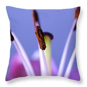 Pastels And Chocolate Throw Pillow by Christi Kraft