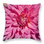 Pink Dahlia II Throw Pillow by Peter French