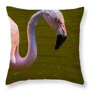 Pink Flamingo Throw Pillow by Garry Gay
