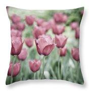 Pink Tulip Field Throw Pillow by Frank Tschakert