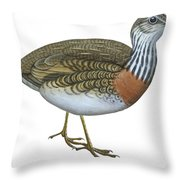 Plains Wanderer  Throw Pillow by Anonymous