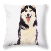 Portrait Of A Siberian Huskybritish Throw Pillow by Thomas Kitchin & Victoria Hurst