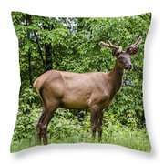 Posing Throw Pillow by Carolyn Marshall