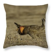 Prairie Chicken-9 Throw Pillow by Thomas Young