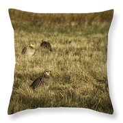 Prairie Chickens After The Boom Throw Pillow by Thomas Young