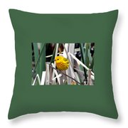 Pretty Little Yellow Warbler Throw Pillow by Elizabeth Winter