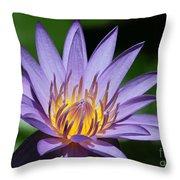 Pretty Purple Petals Throw Pillow by Sabrina L Ryan