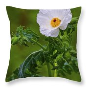 Prickly Poppy Throw Pillow by Gary Holmes