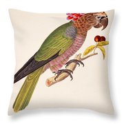 Psittacus Accipitrinus Throw Pillow by German School