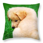 Puppy Love Throw Pillow by Christina Rollo