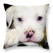 Puppy Pose With 4 Spots On Nose Throw Pillow by Peggy  Franz