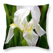 Purely White Iris Throw Pillow by Kathy  White
