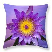 Purple Throw Pillow by Heiko Koehrer-Wagner