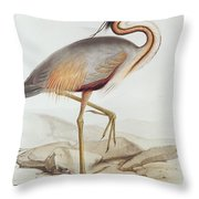 Purple Heron Throw Pillow by Edward Lear