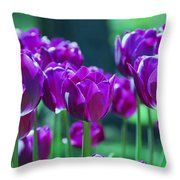 Purple Tulips Throw Pillow by Allen Beatty