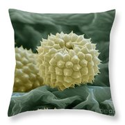 Ragweed Pollen Throw Pillow by Eye of Science