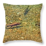 Rainbow Trout Throw Pillow by Tonya Hance
