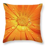 Raindrops On Orange Daisy Flower Throw Pillow by Jennie Marie Schell