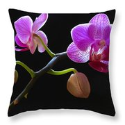 Rare Beauty Throw Pillow by Juergen Roth
