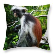 Red Colobus Monkey Throw Pillow by Aidan Moran