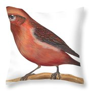 Red Crossbill Throw Pillow by Anonymous