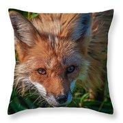Red Fox Throw Pillow by Bianca Nadeau
