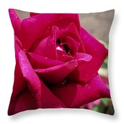 Red Rose Up Close Throw Pillow by Thomas Woolworth