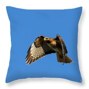Red-tail Hover Throw Pillow by Mike  Dawson