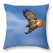 Red-tailed Hawk Soaring Square Throw Pillow by Bill Wakeley
