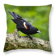 Red-winged Blackbird Throw Pillow by Christina Rollo