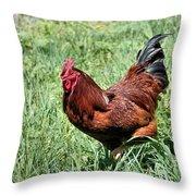 Rhode Island Red Throw Pillow by Kristin Elmquist