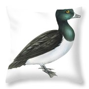 Ring-necked Duck  Throw Pillow by Anonymous