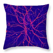 Root Of All Evil Throw Pillow by Randall Weidner