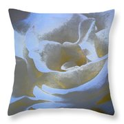 Rose 186 Throw Pillow by Pamela Cooper